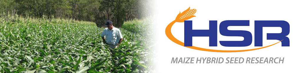 HSR Seeds – One of Australia's leading producers of Maize seed