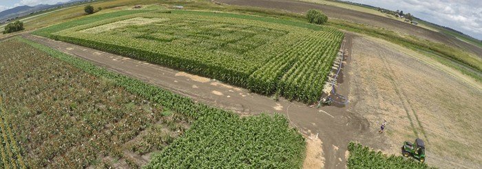 Drone images of HSR research variety testing at Warwick QLD