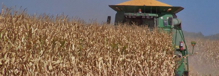 HSR Seeds Hybrid Maize Research Harvest